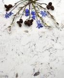 Blaue wilden Niederlassungen der Blumen Scilla des Frühlinges, der Weide und des adler auf De Lizenzfreies Stockfoto