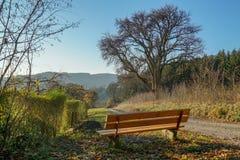 blaue Winterszene der Sonne mit Bankbaum- und -Schotterwegfrühlingstag stockfotos