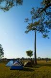 Blaue Zelte im Kieferwald Stockbild