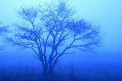 Blauer Baum im Nebel Stockfotos