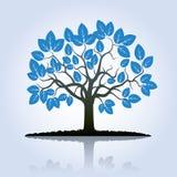 Blauer Baum und Schatten Stockfoto