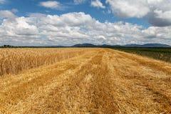 Blauer bewölkter Himmel über Feld des Kornes Lizenzfreies Stockbild