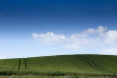 Blauer bewölkter Himmel des grünen Feldes Stockbilder