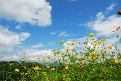 Blauer bewölkter Himmel und Blumen Stockfotografie