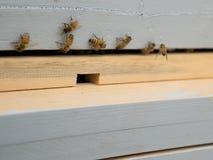 Blauer Bienenstock Lizenzfreie Stockfotografie
