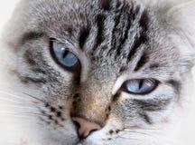 Blauer Blick Lizenzfreies Stockbild