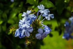 Blauer Blumenblumenstrauß lizenzfreies stockbild