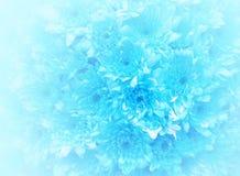 Blauer Blumenstraußhintergrund Stockbilder