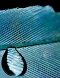 Blauer Feder-Tropfen Stockbilder