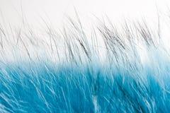 Blauer flaumiger Pelz Stockfoto
