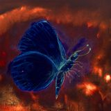 Blauer fliegender Schmetterling in einem hellen turbulenten roten Himmel lizenzfreies stockfoto