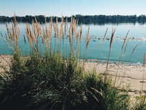 Blauer Fluss, Himmel und grünes Gras Stockbild