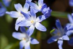 Blauer Frühling Stockfoto