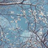 Blauer Frühling Lizenzfreies Stockbild