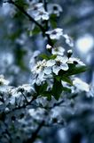 Blauer Frühling Lizenzfreie Stockfotos
