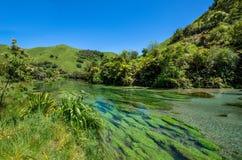 Blauer Frühling, der bei Te Waihou Walkway, Hamilton New Zealand errichtet wird Lizenzfreies Stockfoto