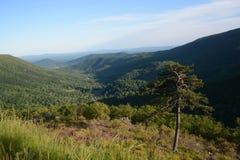 Blauer Frühsommer Ridge Trees Stockfotos