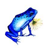 Blauer Frosch und Gänseblümchen Stockfotografie