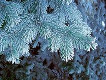 Blauer Frostbaum, Superrauhreifraumnadel Schneiende blaue Baumaste Lizenzfreies Stockbild