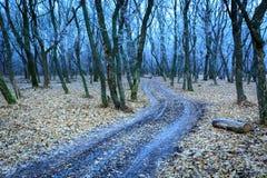 Blauer gefrorener Wald lizenzfreie stockfotografie