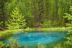 Blauer Geysirsee in Altai-Bergen mit schönem grünem Wald Lizenzfreie Stockbilder