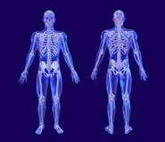 Blauer Glasmann mit dem irisierenden Skelett Stockfotos