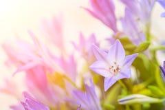 blauer Glockenblumeblumenstrauß der Nahaufnahme Lizenzfreie Stockfotos