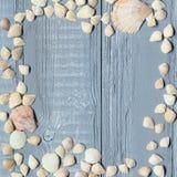 Blauer hölzerner Hintergrund mit Muscheln und Korallen Stockfotografie