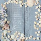 Blauer hölzerner Hintergrund mit Muscheln und Korallen Lizenzfreie Stockfotografie