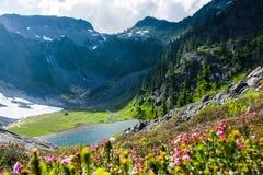 Blauer Heide blüht mit den Bergen und Austin Pass Lake stockfoto