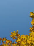 Blauer herbstlicher Himmel im Gelb verlässt Rahmen Stockfotos