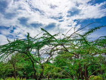 Blauer Himmel über Bäumen Lizenzfreies Stockbild