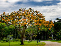 Blauer Himmel über Baum Lizenzfreie Stockfotos