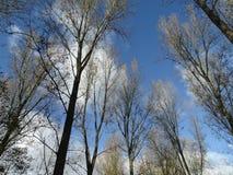 Blauer Himmel über den Bäumen Stockfotos