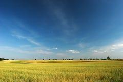Blauer Himmel über Feld Stockbild