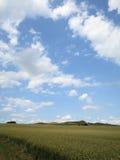 Blauer Himmel über Feld des Weizens Stockfotos