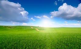 Blauer Himmel über grüner Blütenwiese Lizenzfreie Stockfotos