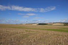 Blauer Himmel über Patchworklandschaft Stockfotos