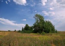 Blauer Himmel über Sommerfeld Stockfotos