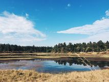 Blauer Himmel über Sumpfgebiet Lizenzfreie Stockfotografie