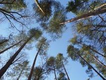 Blauer Himmel! Stockfotografie