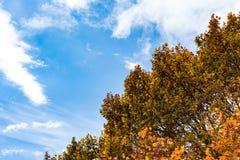 Blauer Himmel-Autumn Orange Yellow Red Leaves-Überdachungs-Baum-Hintergrund Stockfotos