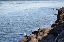 blauer Himmel, blauer Ozean und Palmen Lizenzfreies Stockfoto