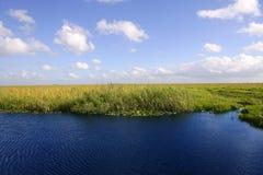 Blauer Himmel in den Florida-Sumpfgebieten Stockfotos