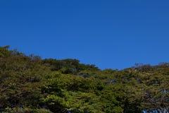 Blauer Himmel der Bäume Stockfotos