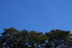 Blauer Himmel der Bäume Stockfoto