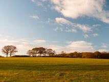 Blauer Himmel der leeren Graslandlandbäume bewölkt Landschaftsebene lizenzfreies stockfoto