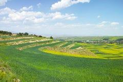 Blauer Himmel der terassenförmig angelegten Felder und weiße Wolken Lizenzfreie Stockbilder