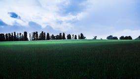 Blauer Himmel des grünen grünen Feldes mit Wolken Stockfotos