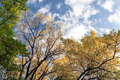 Blauer Himmel des Herbstes mit Wolken und Oberteilen Bäumen mit gelben Blättern Stockbilder